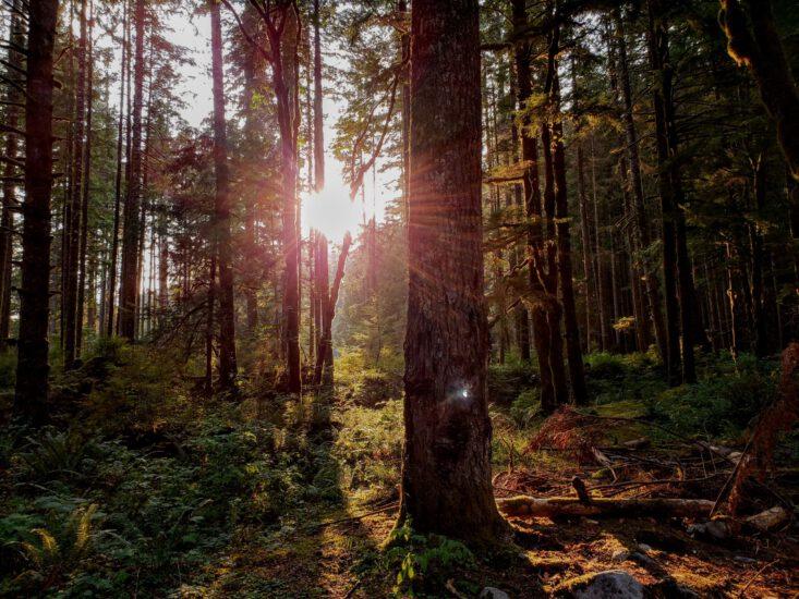 Auringonvaloa metsässä